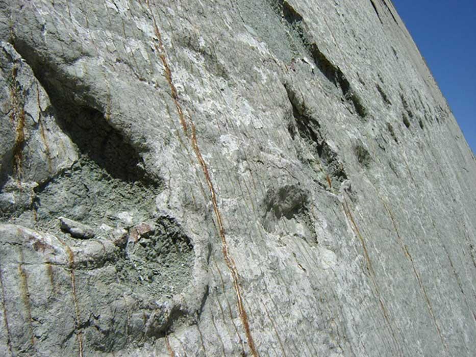 A carnivorous dinosaur track heading up the rock face at Cretaceous Park, Bolivia.