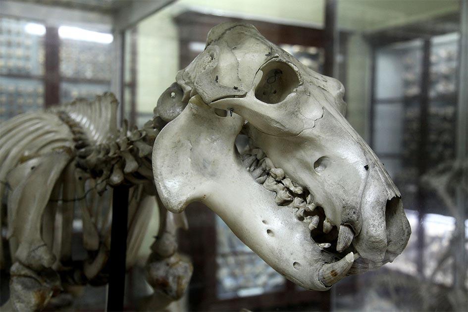 Ghar Dalam – Malta's Unexplained Cave of Bones