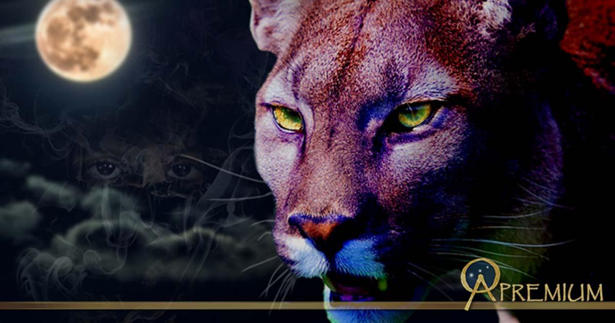 A Puma in the night