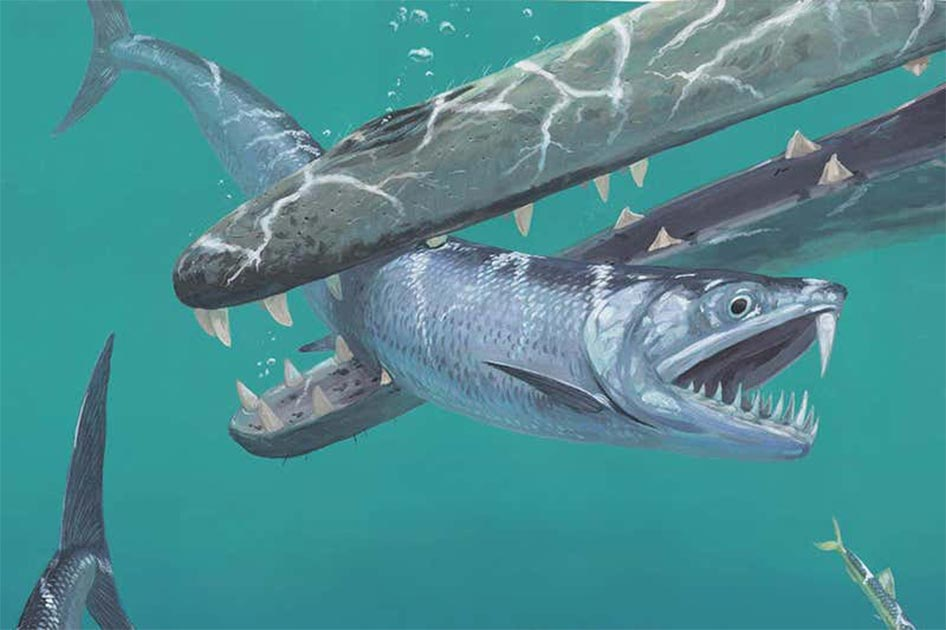 55-Million-Year-Old Fossils Reveal Giant Anchovies With Monstrous Fangs - Ancient Origins