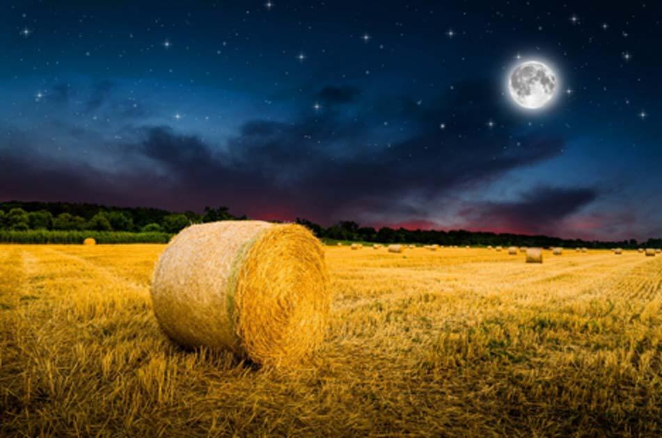 The Harvest Moon. Source: klagyivik / Adobe Stock.