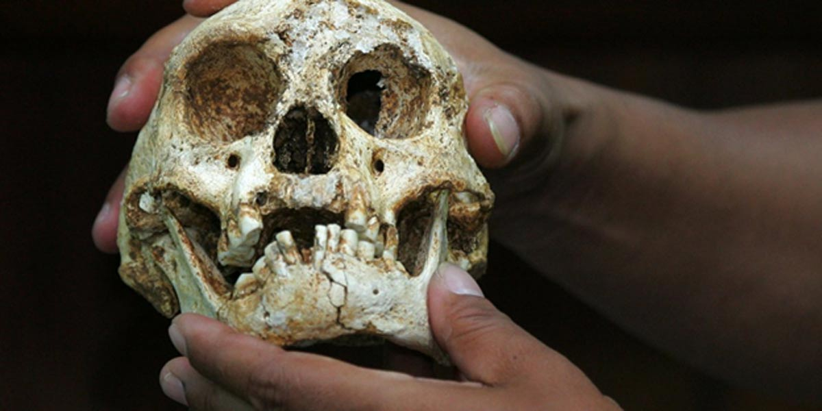 Second Group of Tinier than Hobbit Hominins Found on Flores Island