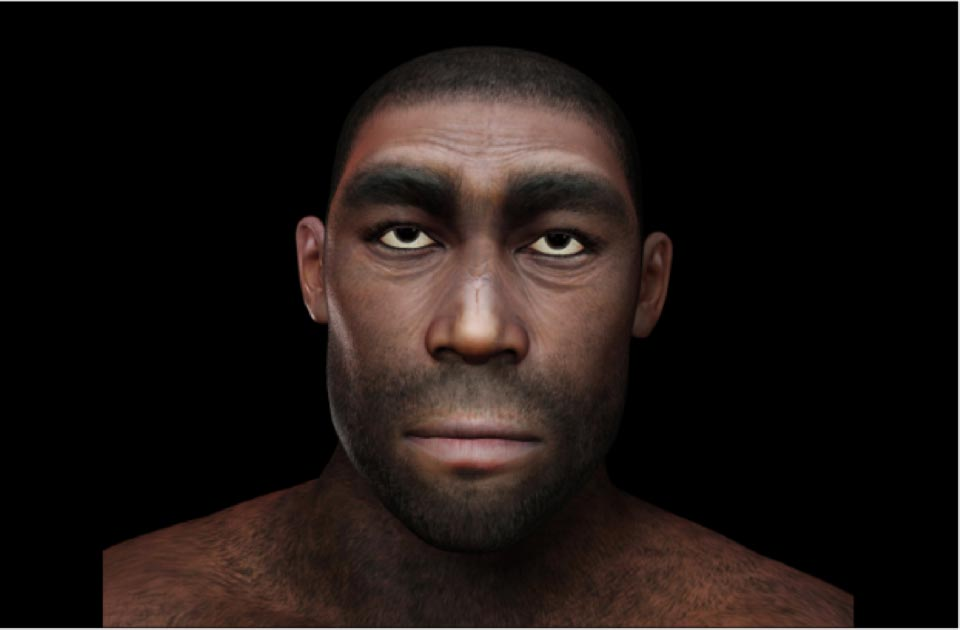 Representation of Homo Erectus. Source: crimson
