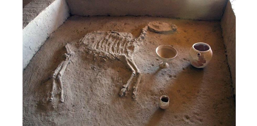 Ancient horse burial in Gonur Depe.