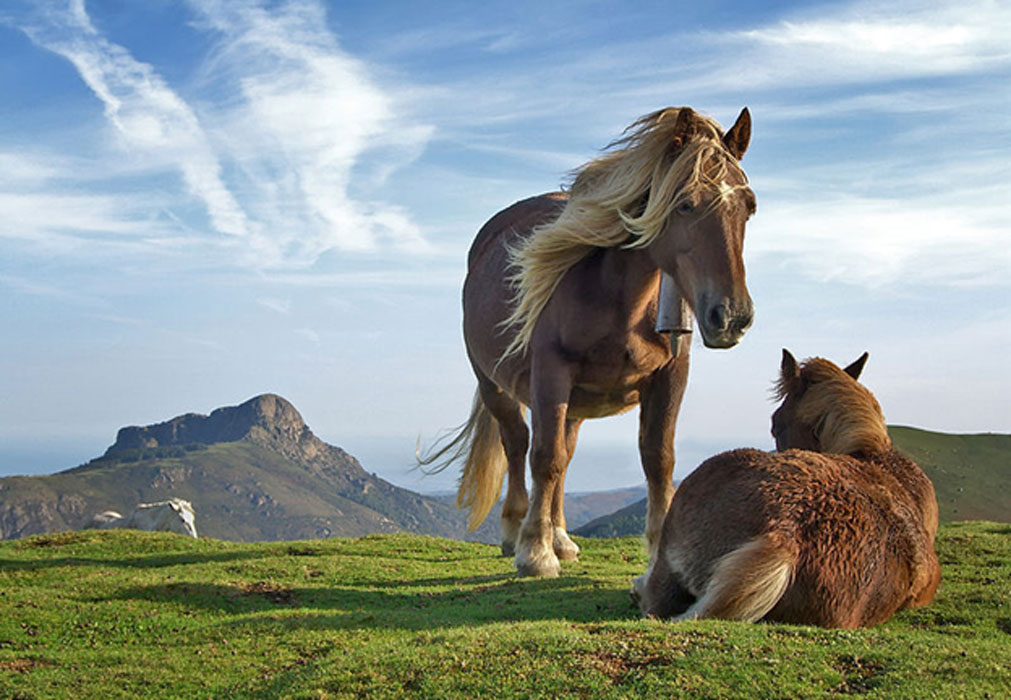 Horses As Symbols Of Power In History And Mythology Ancient Origins