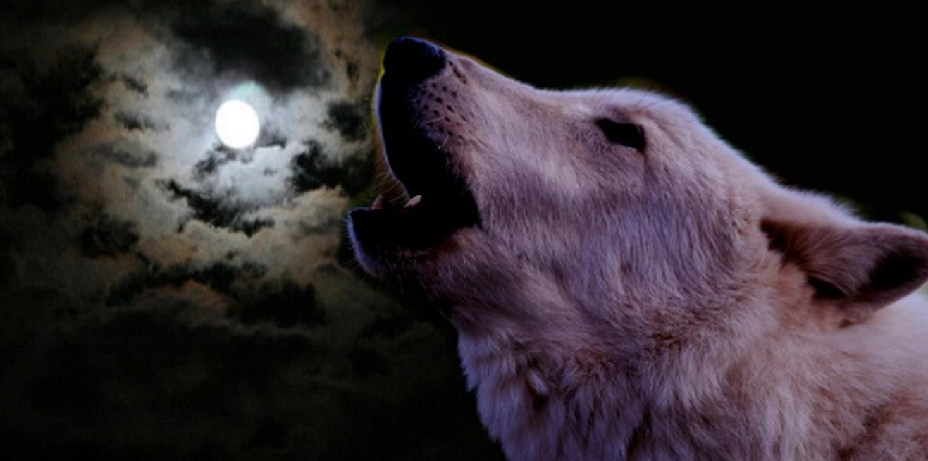 Howling Against The Moon The Last Wolves Of Ireland Ancient Origins