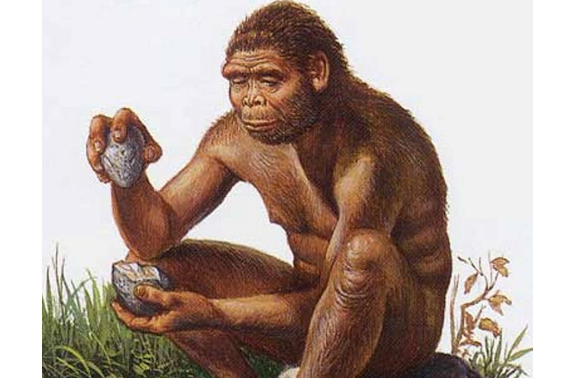 Illustration-of-the-species-Homo-habilis-.jpg (1164×763)