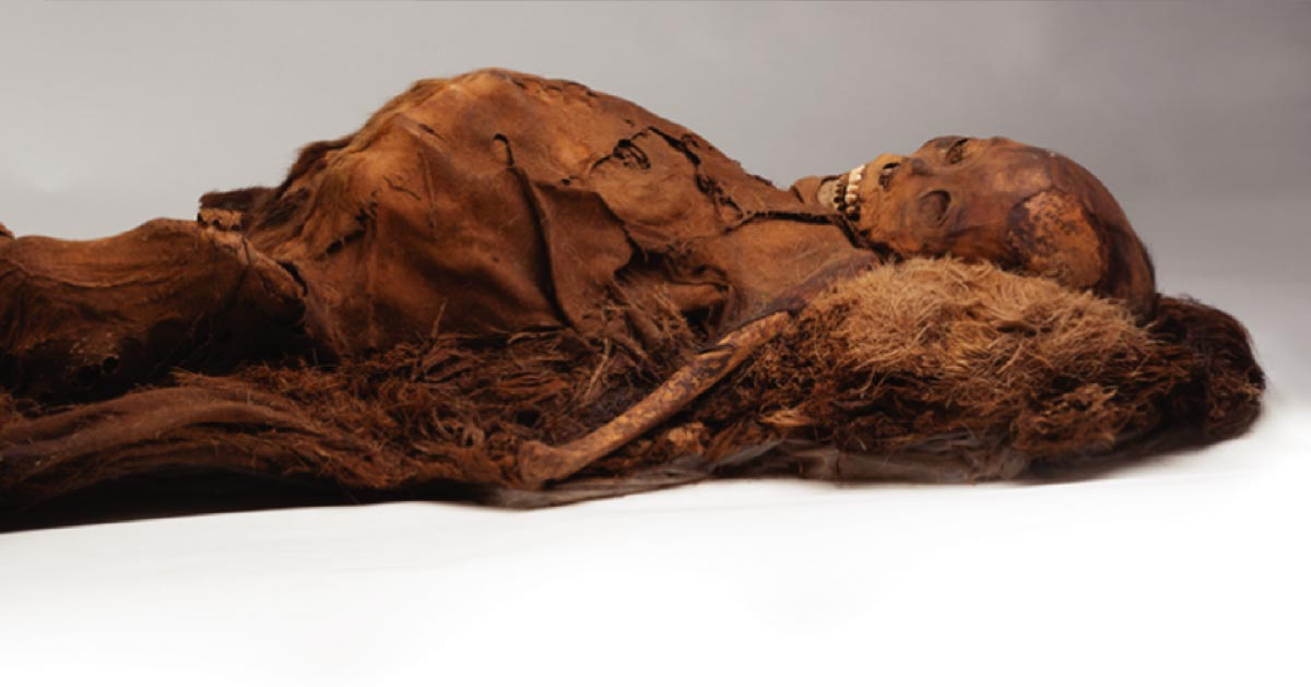 Adult Inuit Mummy Who Was Scanned With Computed Tomography. Source: Courtesy of the Peabody Museum of Archeology and Ethnology, Harvard University, PM 29-10-10/61570.0.