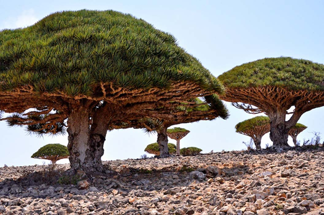 The Lost World of Socotra The Most AlienLooking Place on Earth