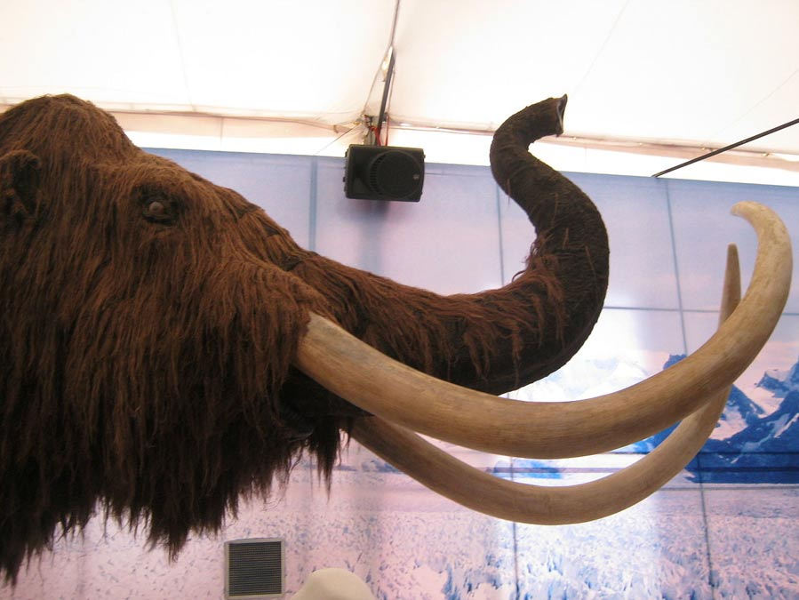 A woolly mammoth reproduction; the animal the hunters faced 45,000 years ago must have been awesome.
