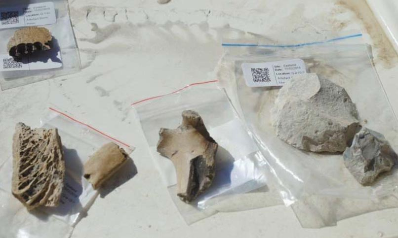 Bones and stone tools found at the site of the Māori village