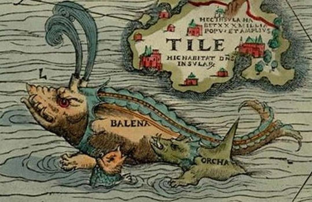 Orcas attacking a whale, from Carta Marina (1539)