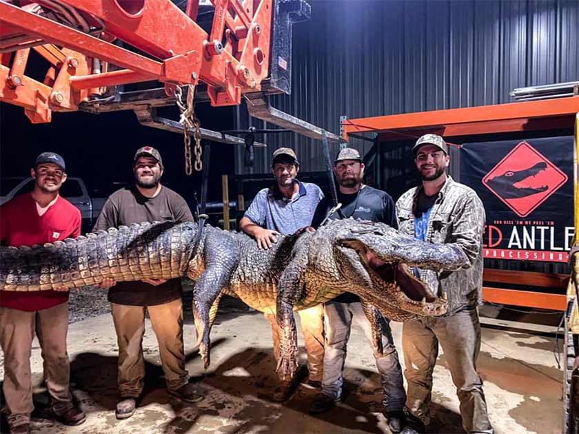Two Amazing Ancient Artifacts Found Inside Giant Mississippi Alligator