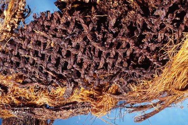 Mostagedda funerary textile - Mummification
