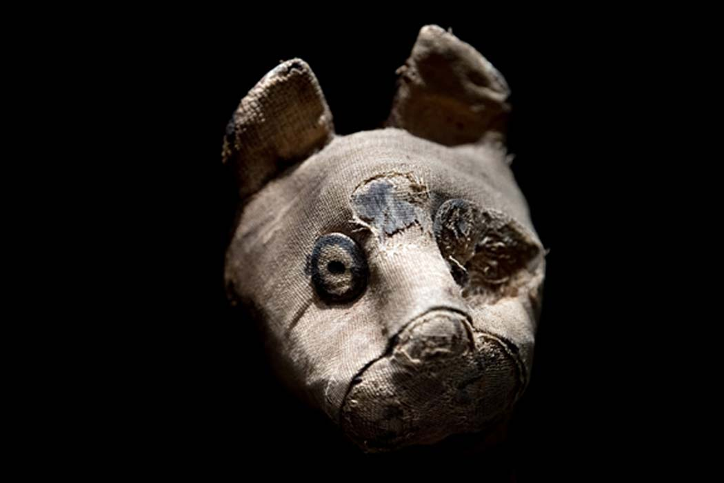 Mummified cat found in Egyptian tomb