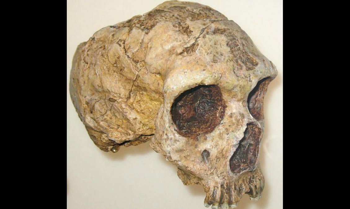 Neanderthal skull discovered along the Strait of Gibraltar.