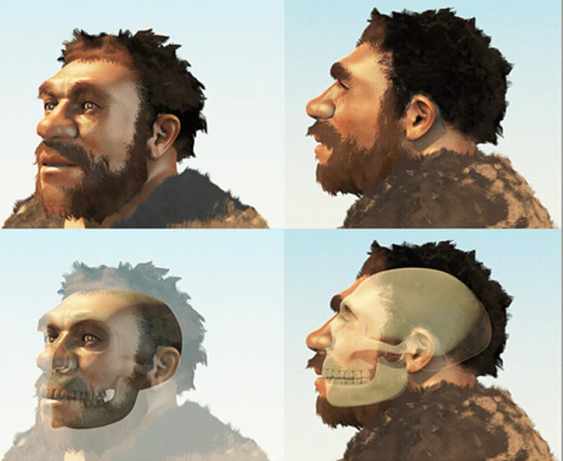 A reconstruction of a male of our evolutionary cousin the Neanderthals (Modified from an image by Cicero Moraes).