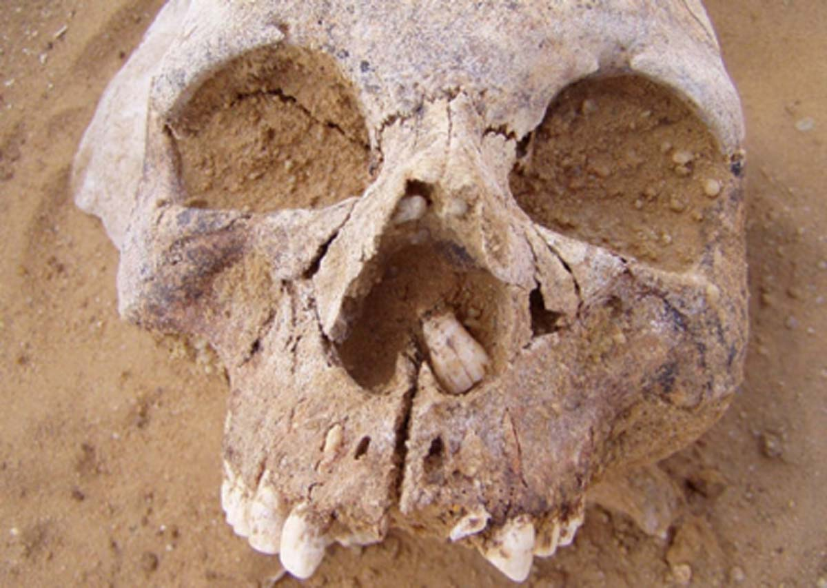 Example skull of Neolithic people. Source: (Author provided/ The Conversation)