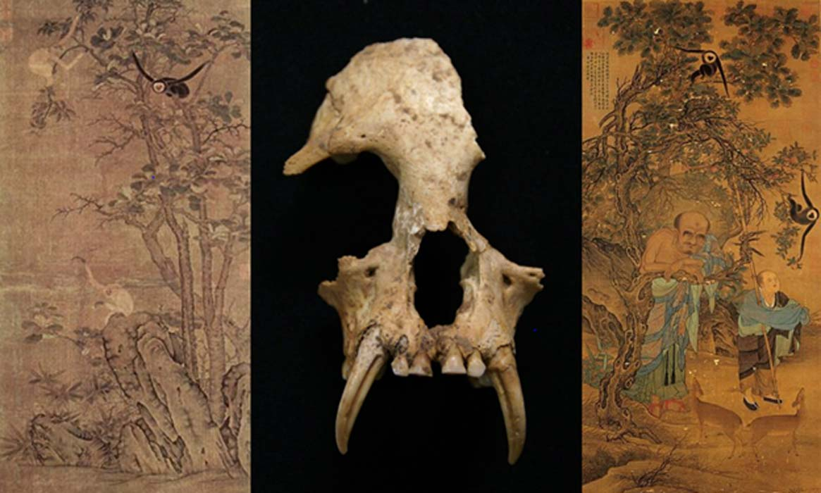 Gibbon skull found in China (Credit: Samuel Turvey/ZSL); Luohan, hanging scroll, ink and color on silk (Public Domain); Apes and Horses (Public Domain)