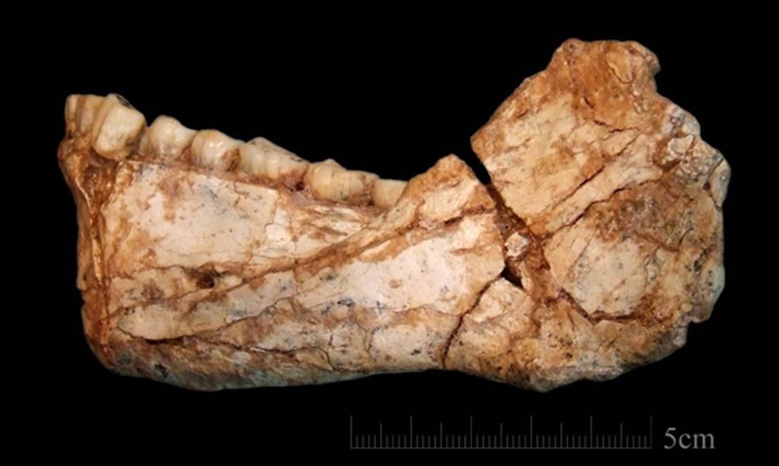 first homo sapiens found -#main