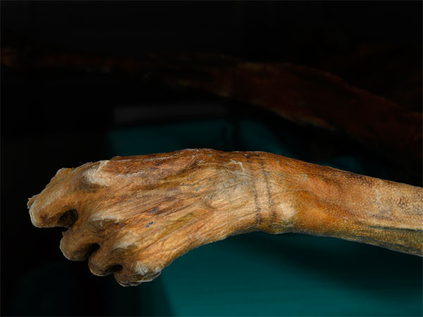 Otzi Iceman Tattoos
