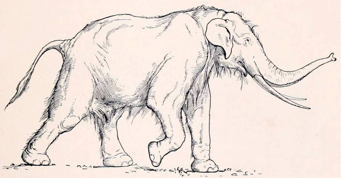 Paeleoxodon anitquus was a large elephant species that became extinct.