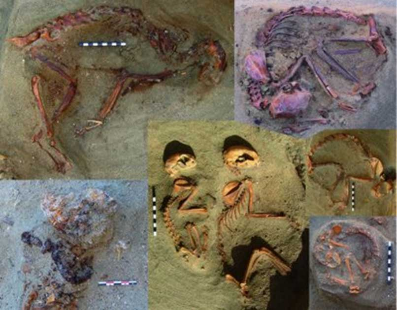 A Roman Era Pet Cemetery: 86 Cat Burials Discovered in Egypt