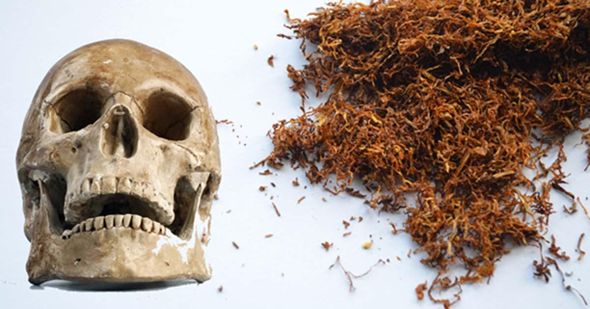 A human skull (Public Domain) and tobacco. (Public Domain)