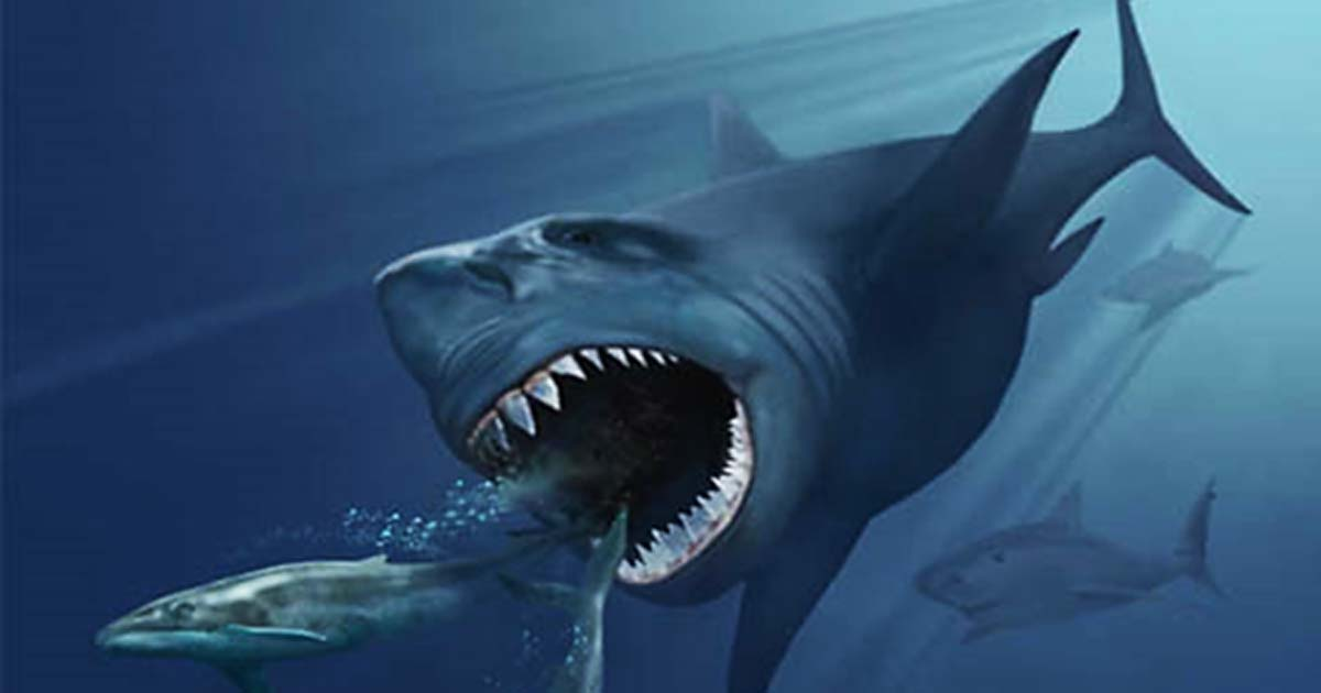 Stay Out of the Water: Does a Prehistoric Shark Still Live in the Ocean?