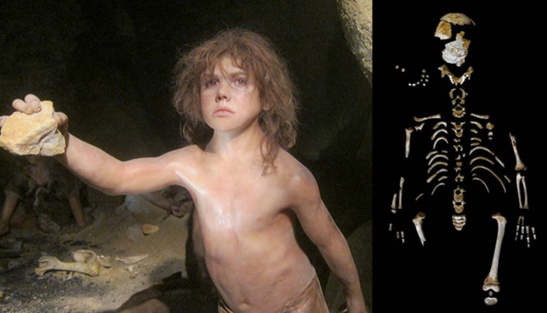 Representation of a Neanserthal boy at the Neanderthal Museum, Krapina, Croatia. (Michael (a.k.a. moik) McCullough/CC BY NC ND 2.0) Skeleton of the Neanderthal boy recovered from the El Sidrón cave (Asturias, Spain). (Paleoanthropology Group MNCN-CSIC)