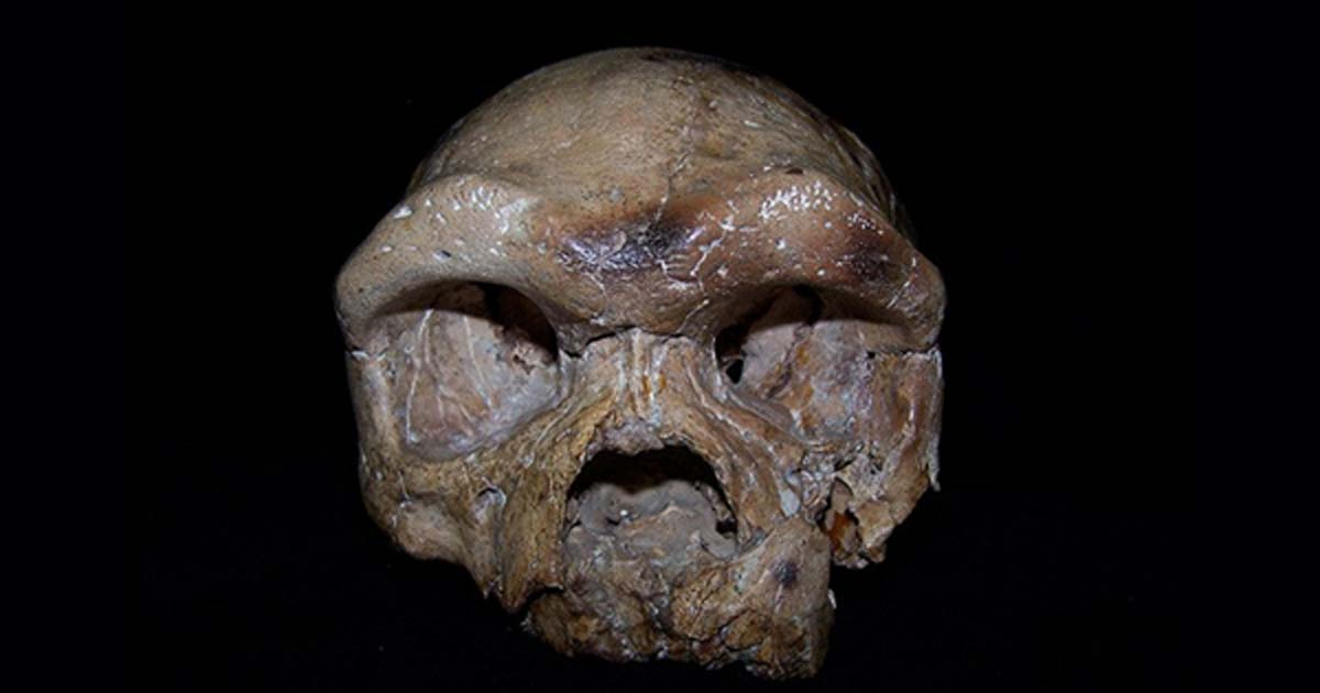 A re-analysis of the Dali skull is helping rewrite the story of human origins.