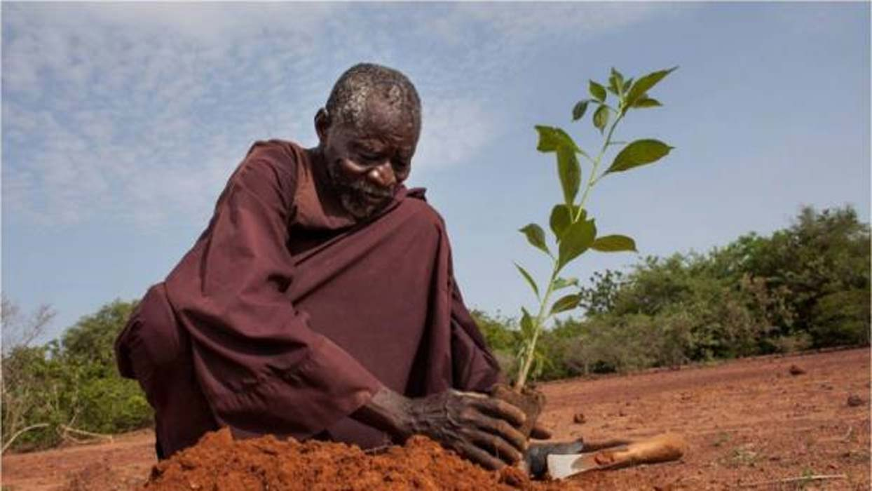 The man who stopped a desert using ancient farming ancient origins yacouba sawadogo planting fandeluxe Images