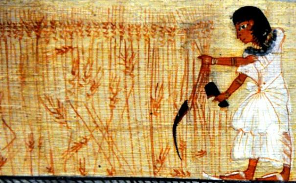 Advanced Agricultural Knowledge 8,000 Years - Fertilizers