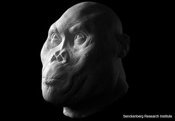 Ancient Hominids Face Reconstruction