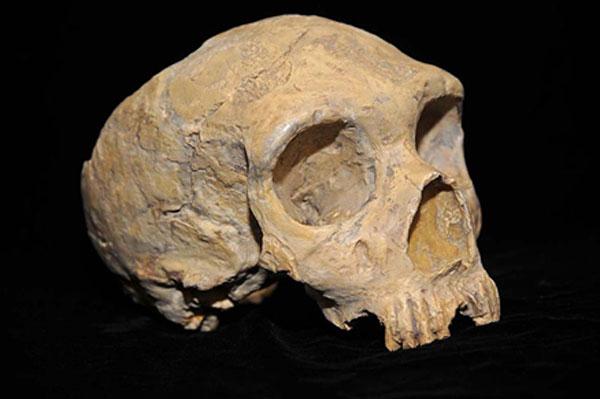Ancient human skull of Neanderthal