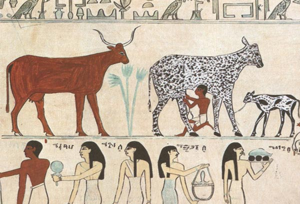 Ancient drawing with Cows and Milk
