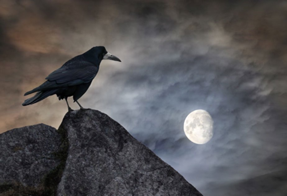 Birds in the Ancient World: Messengers of Omens and Auguries