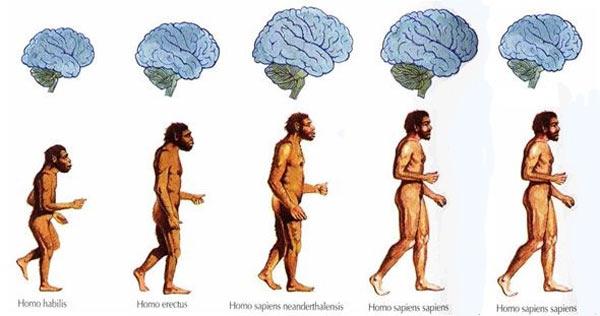 Shrinking Brain in Humans