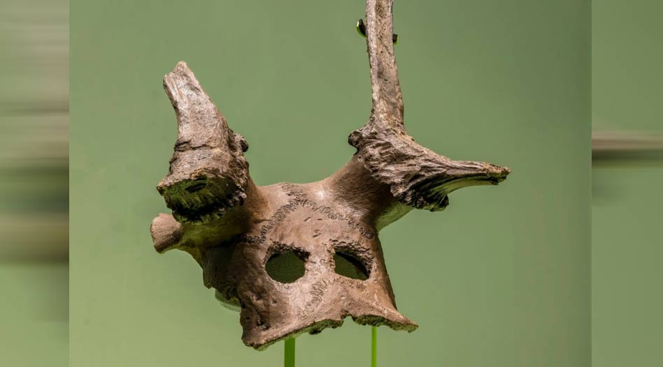 One of the three Mesolithic deer skull headdresses from the new Star Carr exhibition at the Museum of Archaeology and Anthropology