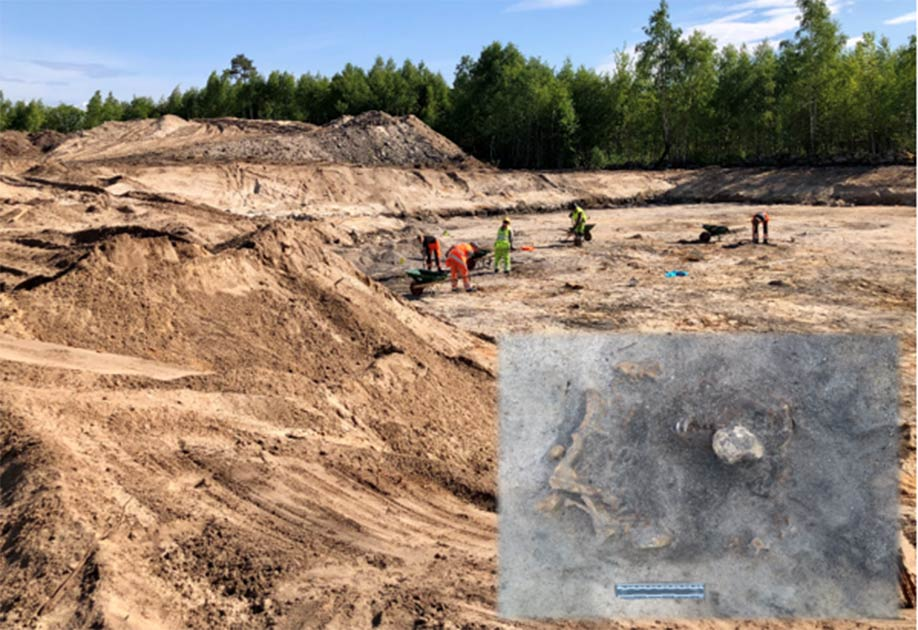 Respect For Canines Shown In Stone Age Dog Burial In Sweden