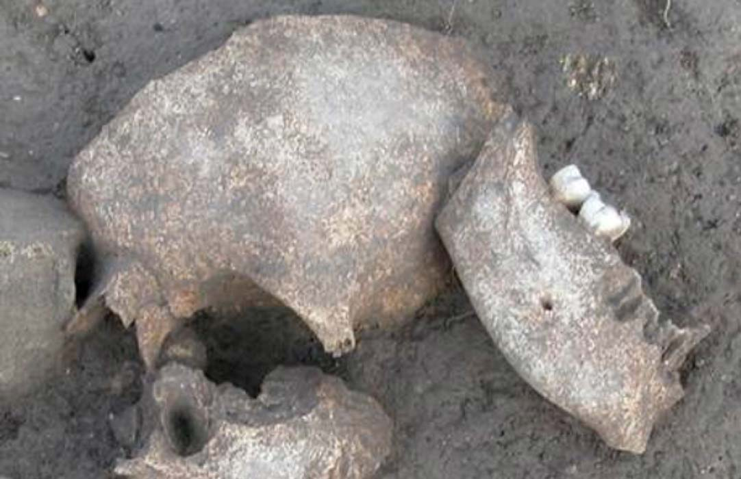 Skulls found at Le Cailar archaeological site show signs that the heads were embalmed.
