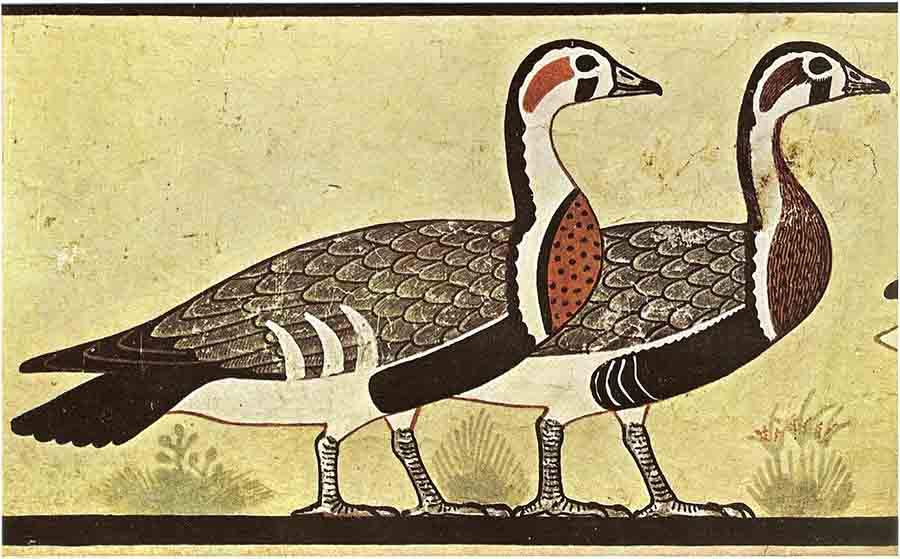Anthony Romilio argues that the geese depicted in the 4,600-year-old- tomb painting at Meidum is actually an extinct goose species. Source: Public domain