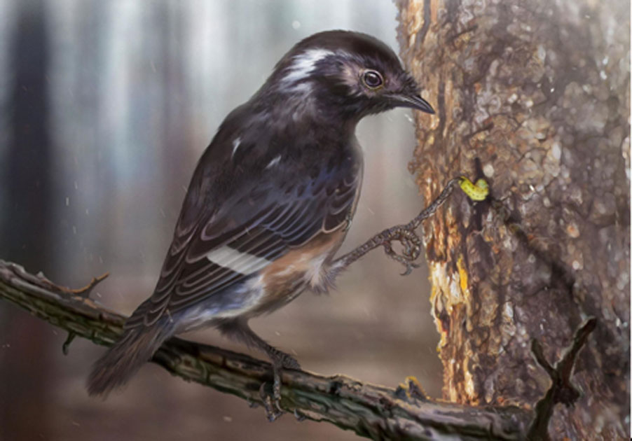 Artists impression of the bird with a third toe 41 per cent longer than the second toe. Source: Zhongda Zhang/Current Biology