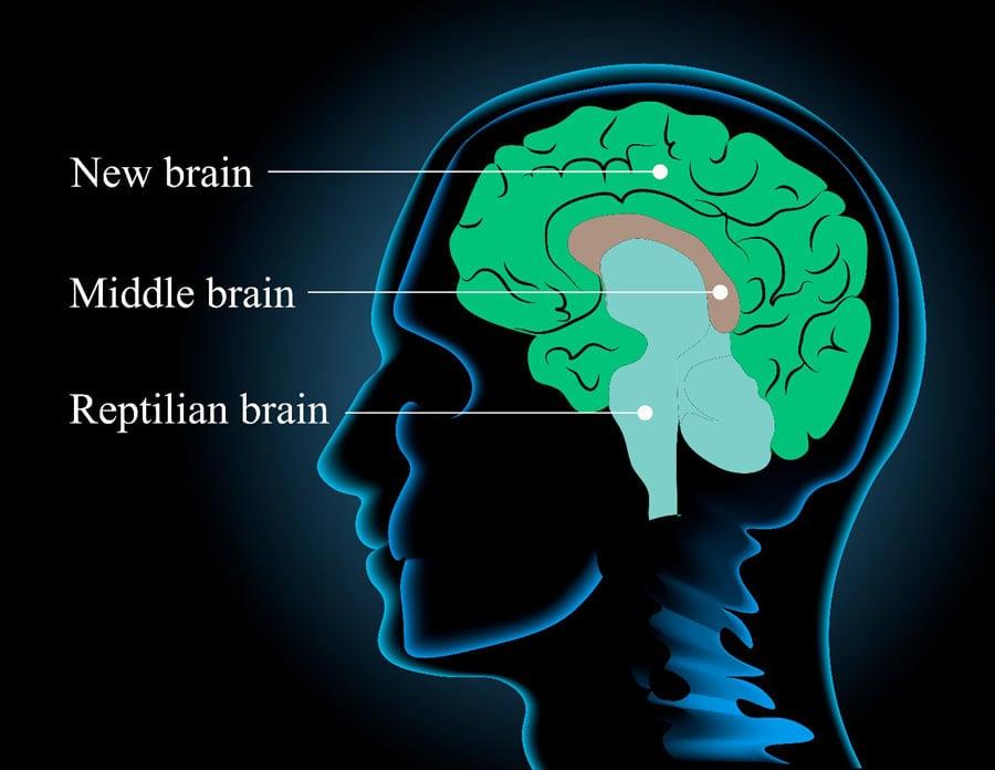 Three Thousand Years Ago Human Brain Size Decreased, Says Study