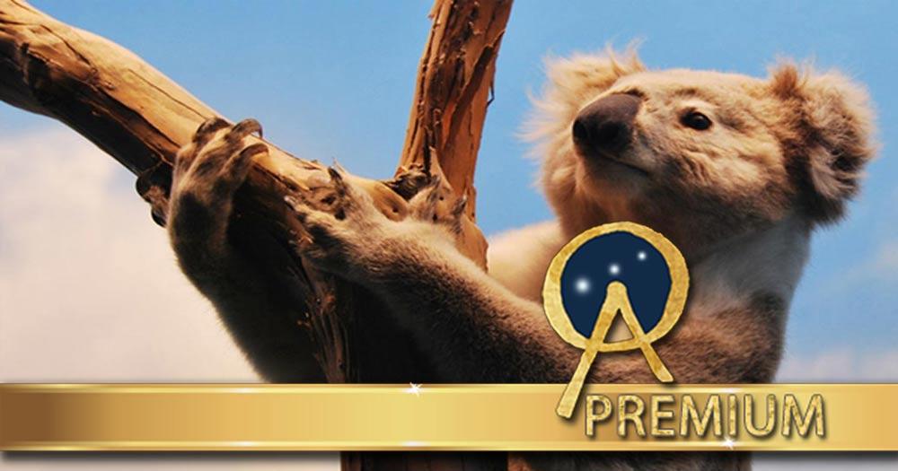 Koalas: Dreamtime Legends, Ancient Symbols, and their Dangerous Prehistoric Ancestors