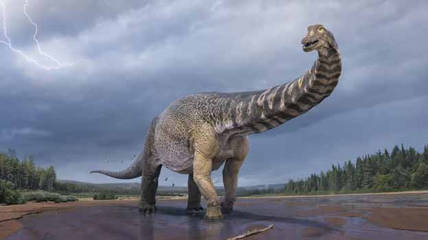 Australia's Largest Dinosaur Revealed To Be As Long As A Basketball Court!