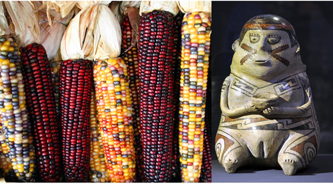 Examples of variegated maize ears and a figurine from the Casas Grandes culture c. 1200 - 1450.