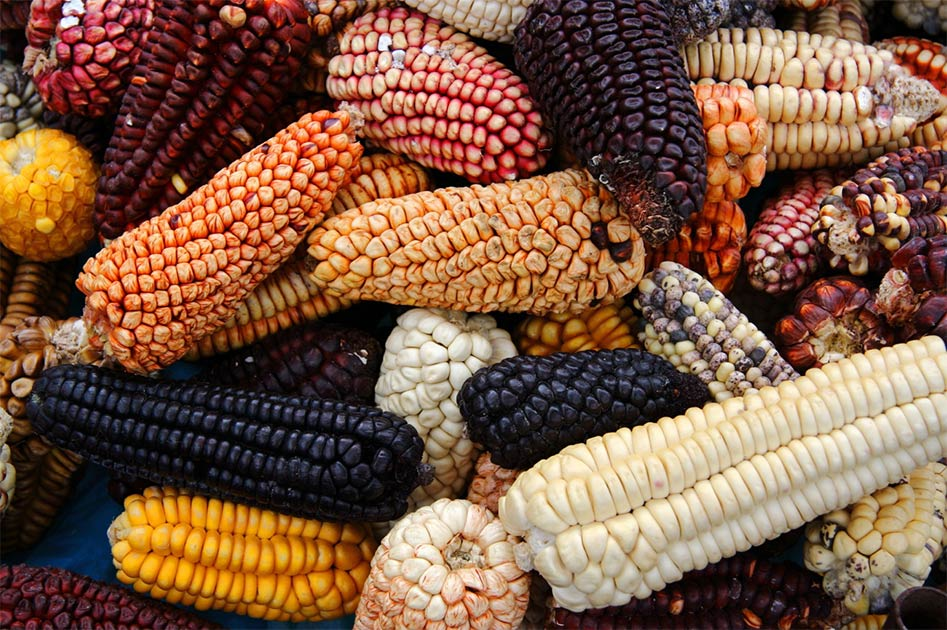 Ancient Burial Brings New Date Of First Maize Use In Mesoamerica