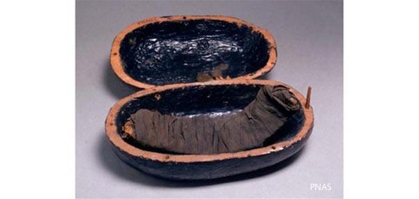Mummified meat