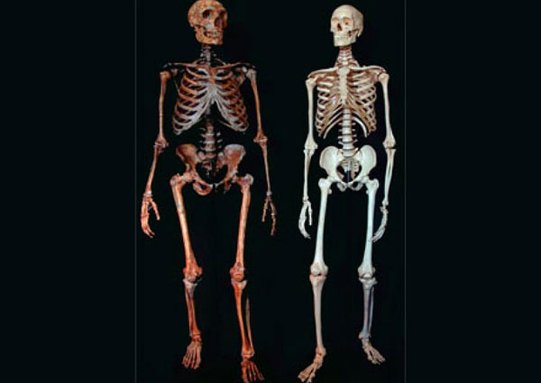 Neanderthal vs Human skeletons